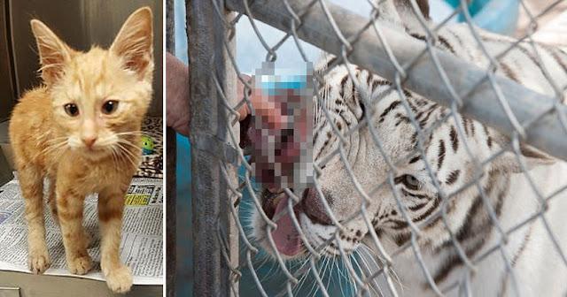Зоопарки Швейцарии скармливают хищникам «ненужных» домашних питомцев