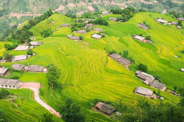 Bình yên giữa ruộng đồng Hoàng Su Phì