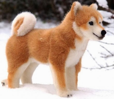 Japanese Dogs Shiba Inu