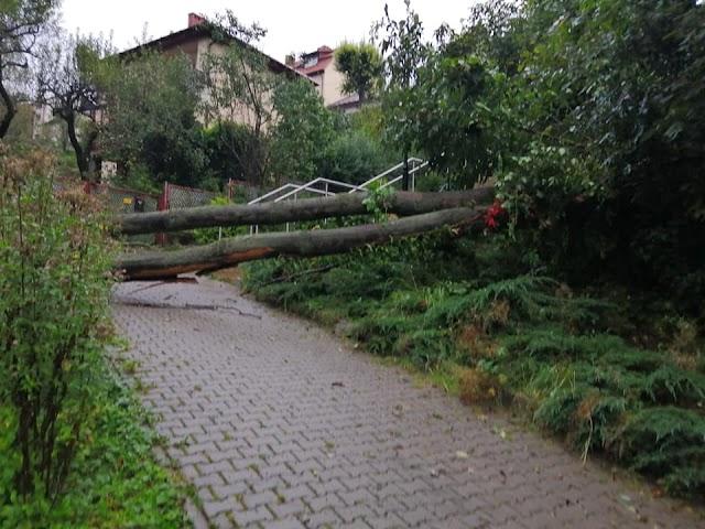Powalone drzewa - strażacy udrożnili przejście na rynek