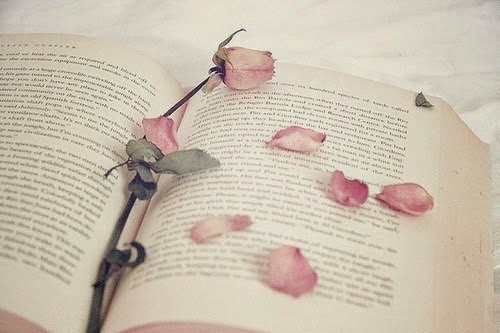 libro di rose romantic