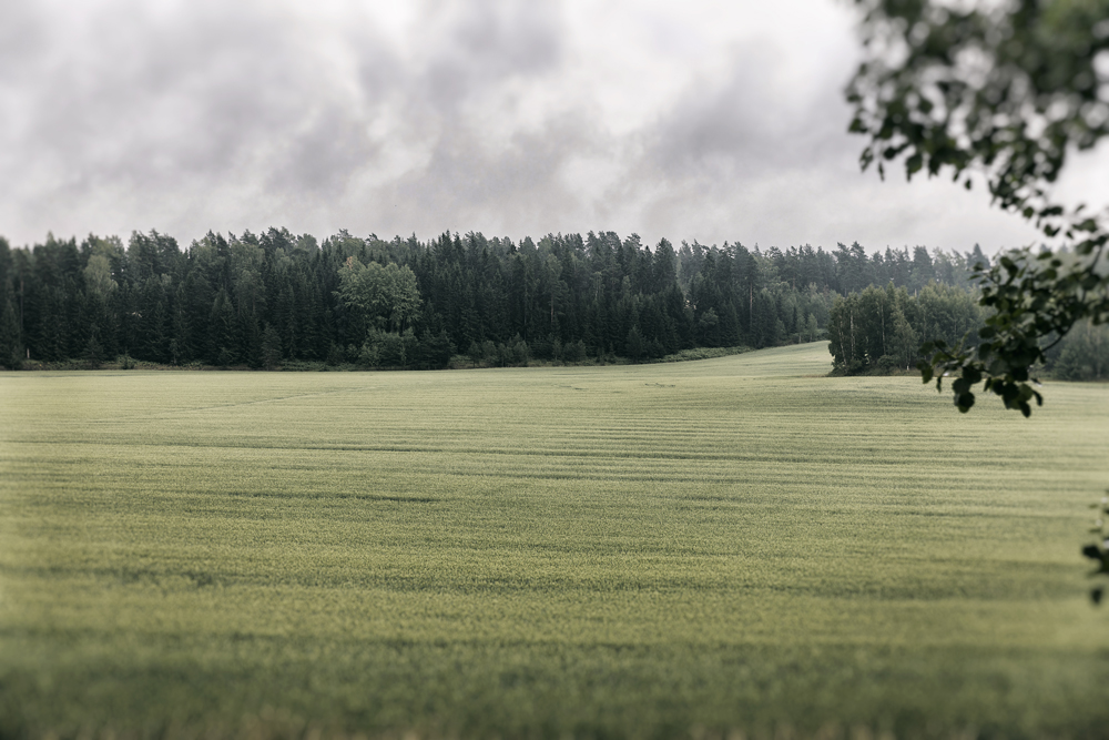 luonto, nature, Porkkalanniemi, Kirkkonummi, Suomi, Finland, visitfinland, experiencefinland, naturelovers, outdoorphotography, outdoors, Visualaddict, valokuvaaja, Frida Steiner, luontovalokuva, pelto, metsä