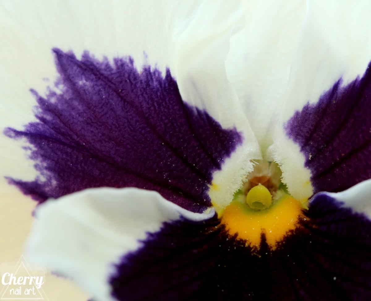 photo-macro-jardin-fleur-pensée