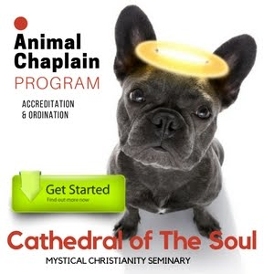 Become an Animal Chaplain