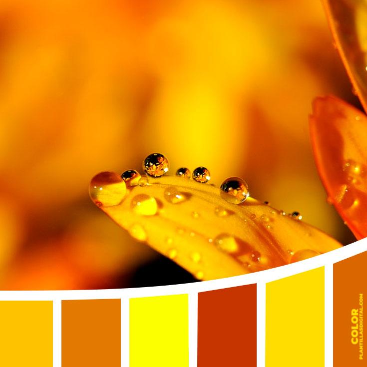 color_423