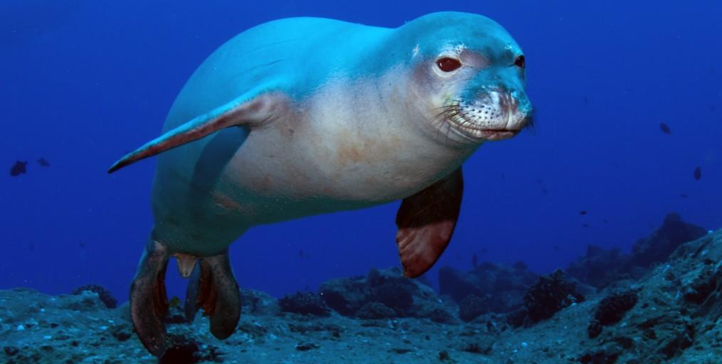 Las focas: características, identificación, alimentación, hábitat y ...