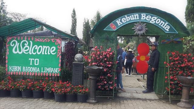 Kebun Begonia Lembang, Wisata Sejuta Bunga yang Sejuk dan Indah