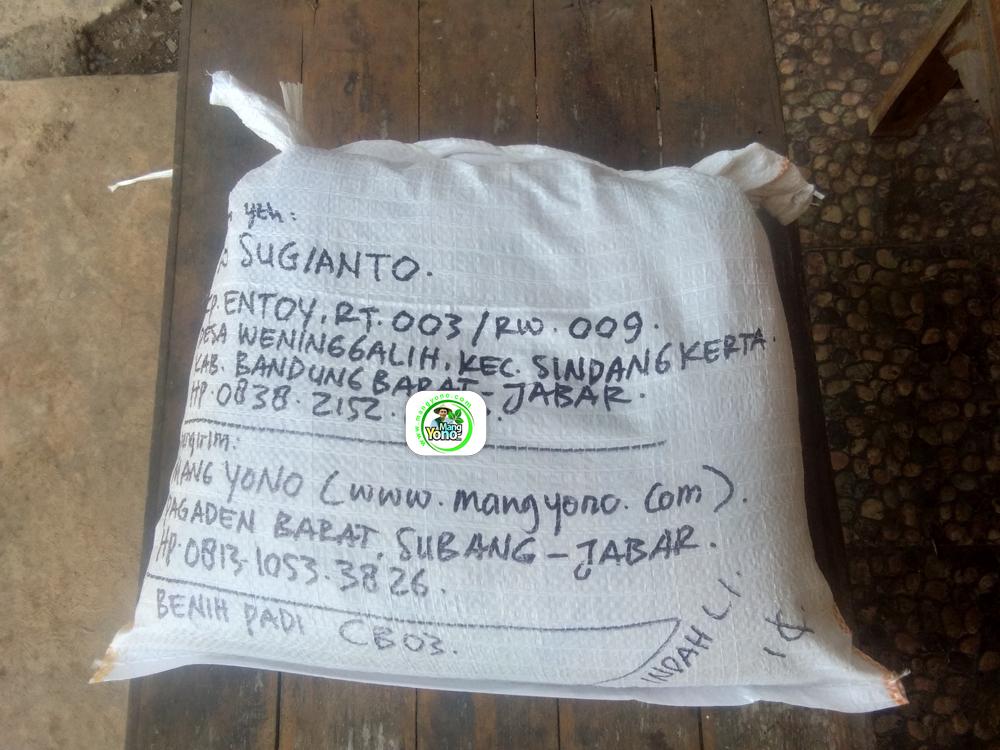Benih Padi yang dibeli EKO SUGIANTO Bandung Barat, Jabar.   (Setelah packing karung).