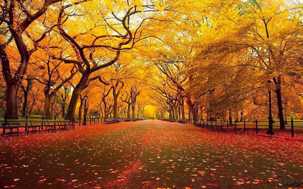 autumn-park-yellow-wallpaper