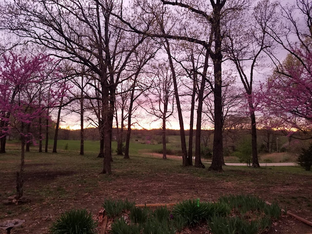 Purple sunset through trees in Missouri