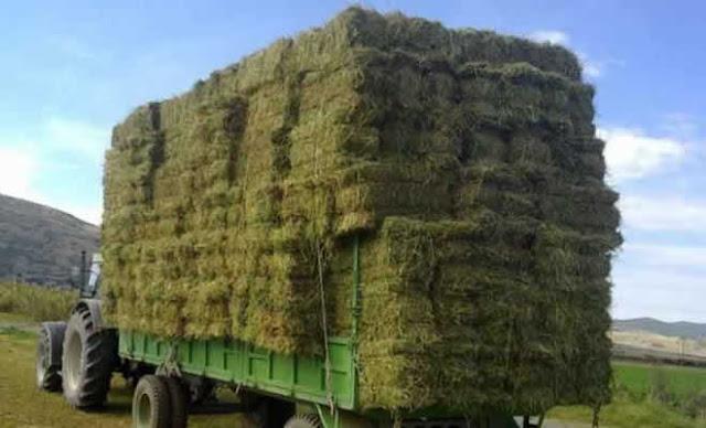 Ξεκινάει η διανομή ζωοτροφών στους πυρόπληκτους κτηνοτρόφους του Δήμου Ανατολικής Μάνης