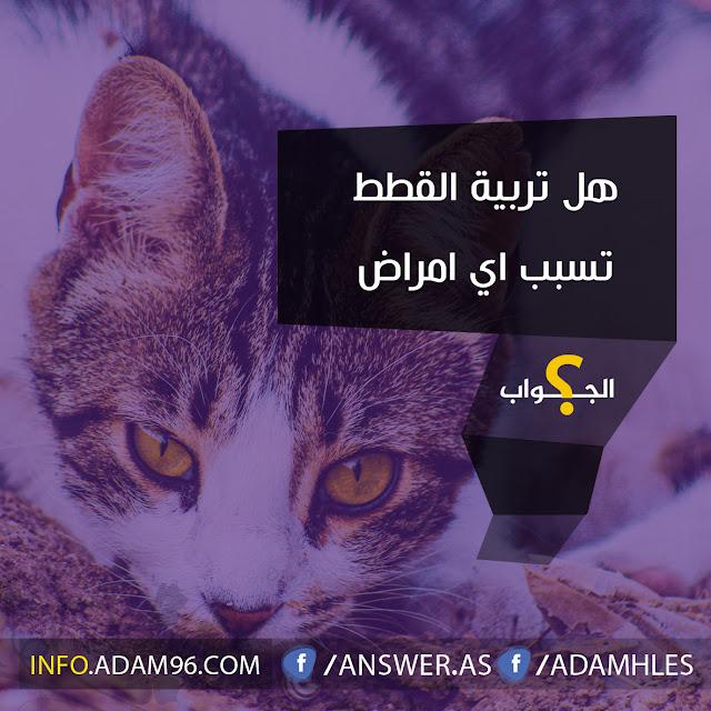 هل تربية القطط تسبب اي امراض سؤال وأجابة