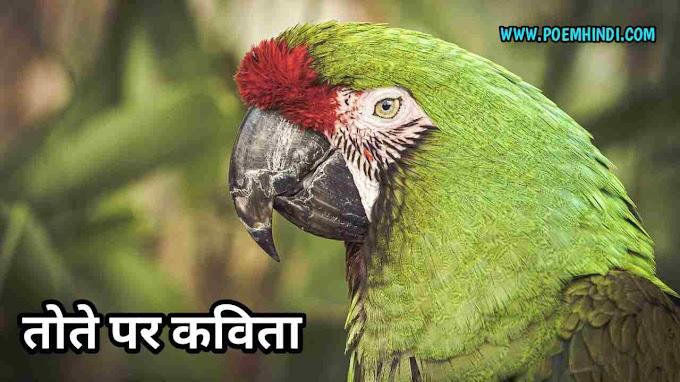 तोते पर कविता | Parrot Poem In Hindi