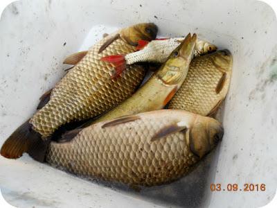 peste pescuit de tatal meu