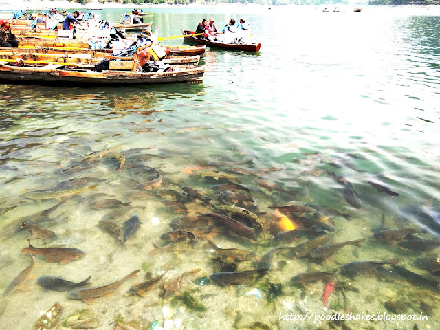 Fishes in Naini Jeel