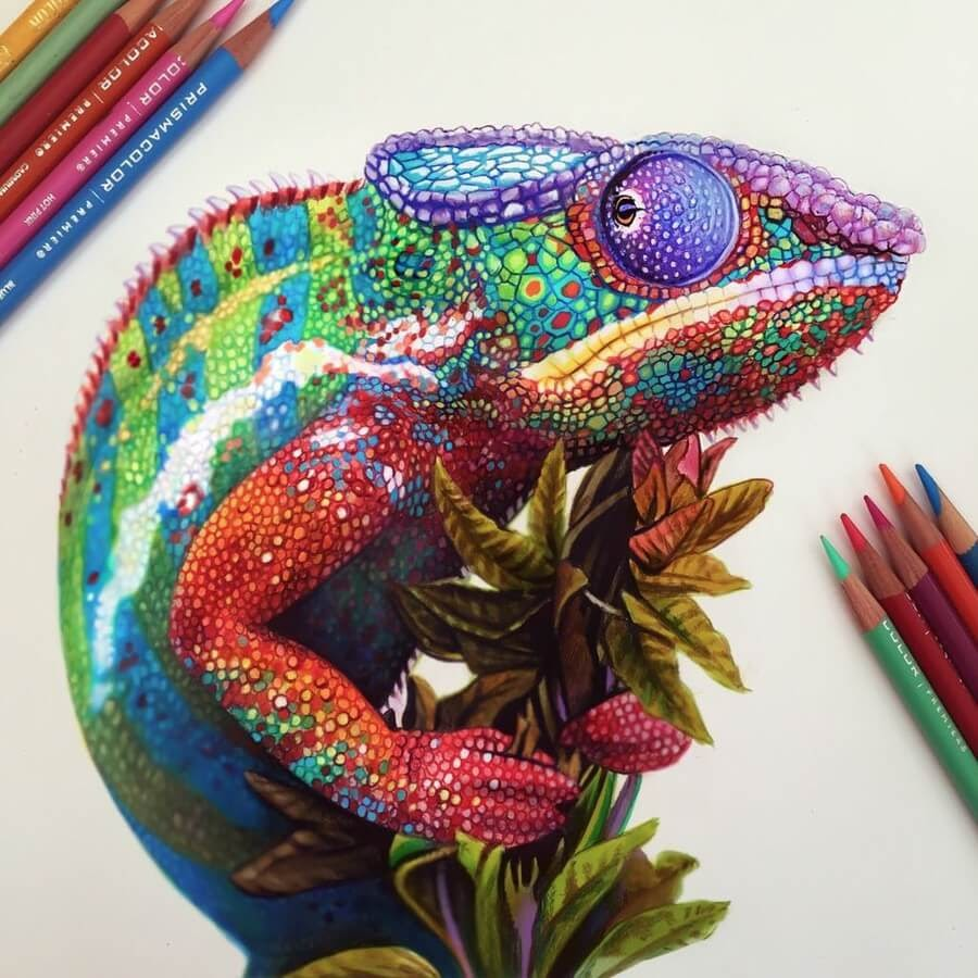 09-Chamelion-Animal-Drawings-www-designstack-co