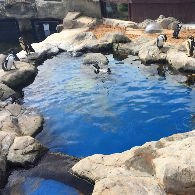 Scarborough Sea life sanctuary penguins
