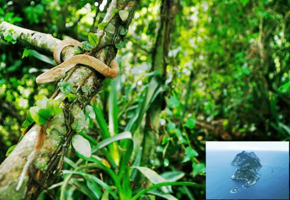 Medo-Ilha-com-cobras