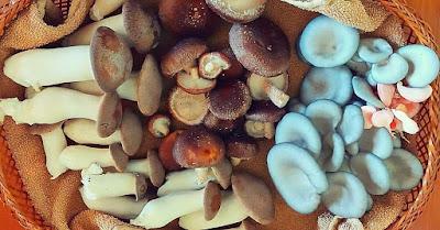 Mushroom Supplier Company in Vijayawada