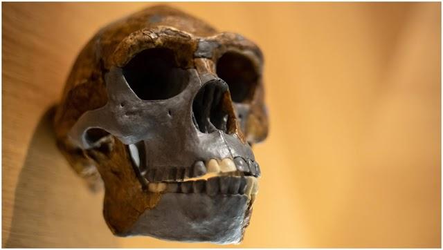 Ανακαλύφθηκε ένθετο «DNA» προγόνου που ζευγαρώθηκε με ανθρώπους