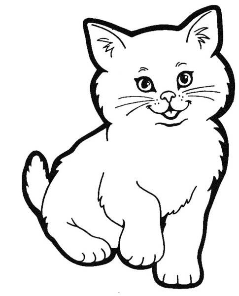 √ 1000+ Mewarnai Gambar Kucing Anggora