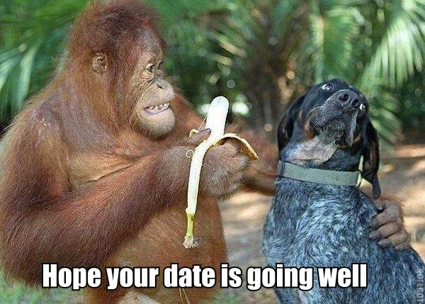 Funny Hope Your Date Is Going Well Orangutan Dog Meme Joke Picture