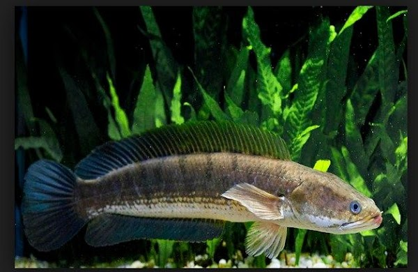 3 THIS DISEASE CAN CURE JUST USING A Cork FISH