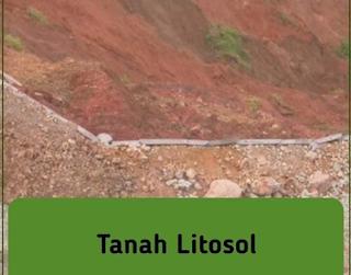 gambar tanah litosol
