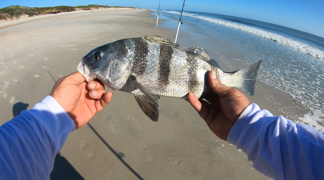 Fish Report, Florida Surf Fishing, Florida, Surf Fishing, Florida East Coast Surf Fishing, Florida Surf Fishing, Fishing Report, Fish Reports, What's biting,