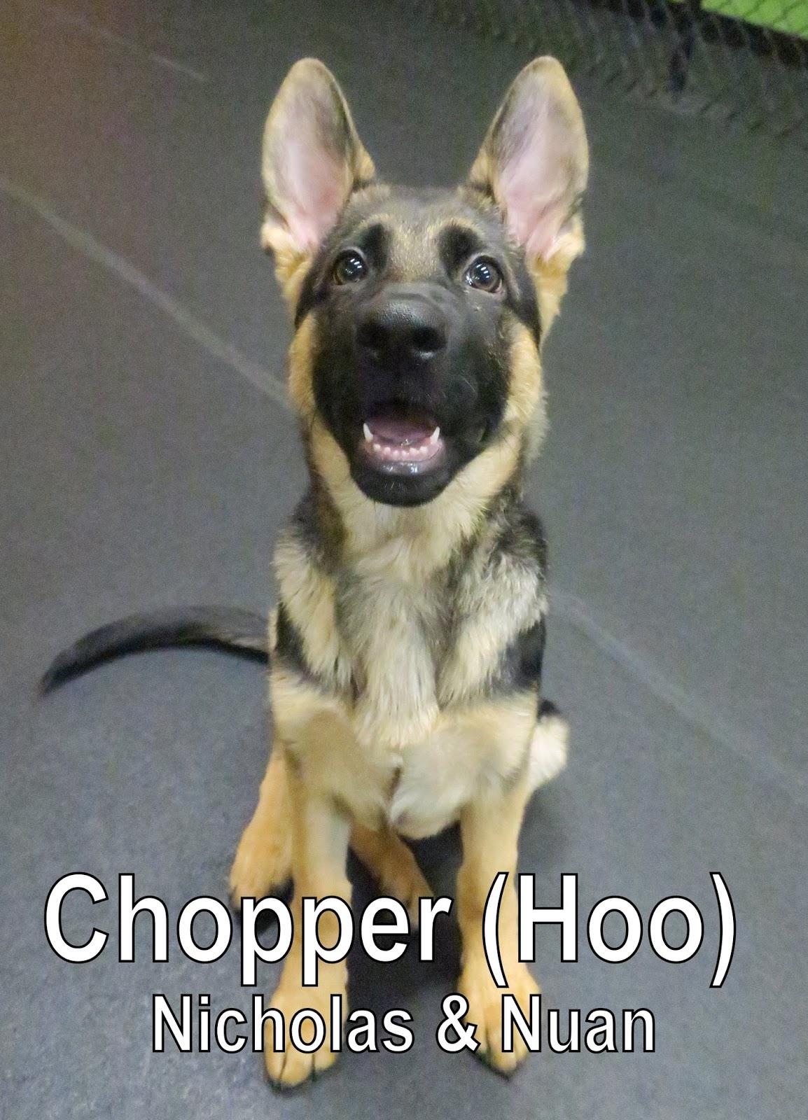 fort fido dog daycare boarding news blog chopper. Black Bedroom Furniture Sets. Home Design Ideas