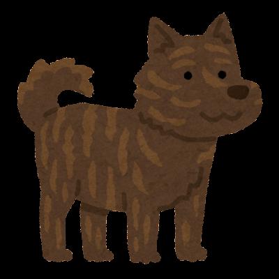 甲斐犬のイラスト