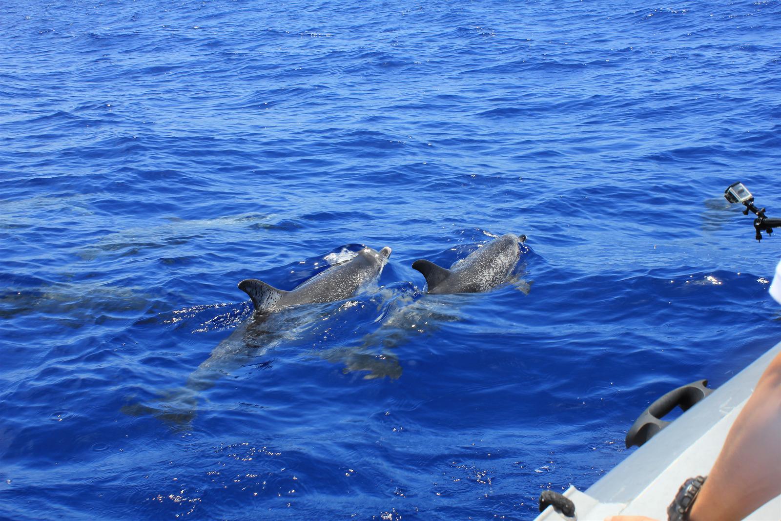 https://www.dolphinesse.com/p/escapade-famille-bretagne-insolite.html