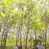 Ένα «σμαραγδένιο» δάσος στη μάχη κατά της κλιματικής αλλαγής (video)