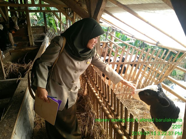 Pengurangan Telur Fertil Untuk Stabilisasi Supply Demand Unggas (Tati Susnawati, S.Pt - BIB Lembang)