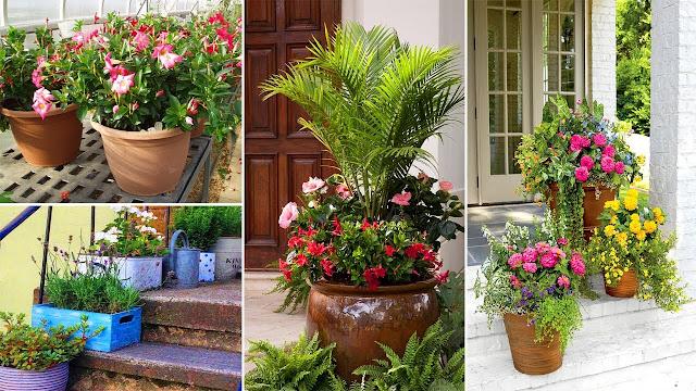 Best Container Gardening Ideas