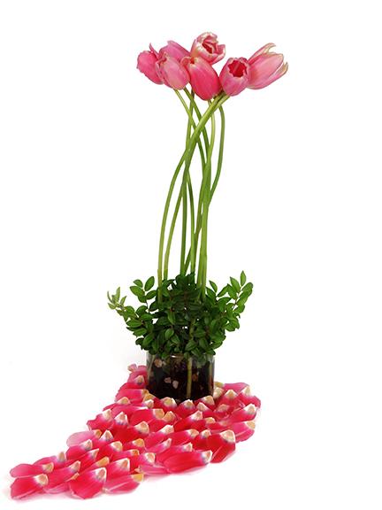 French Tulip Flower Design