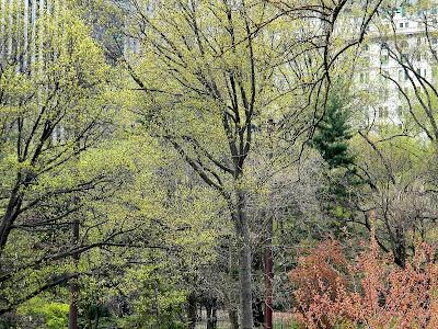 Spring New York City