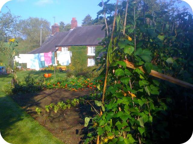 Cottage garden in the autumn