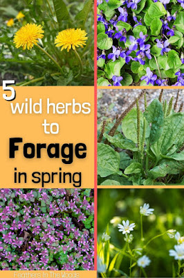pictures of wild herbs to harvest in spring