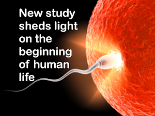 New study sheds light on the beginning of human life