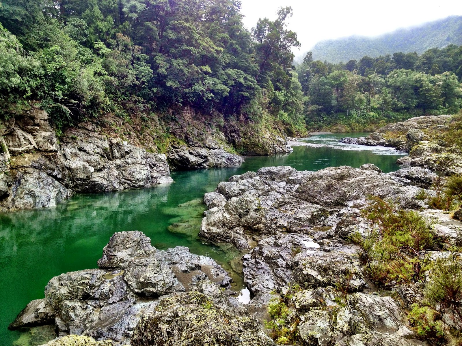 The view from Pelorus Bridge, New Zealand