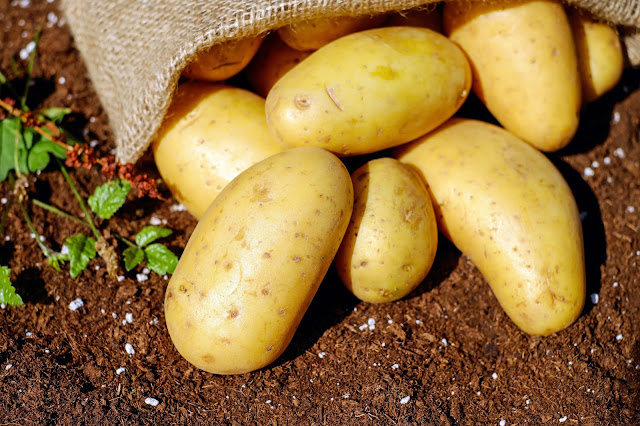 a bunch of potatoes laid on the soil