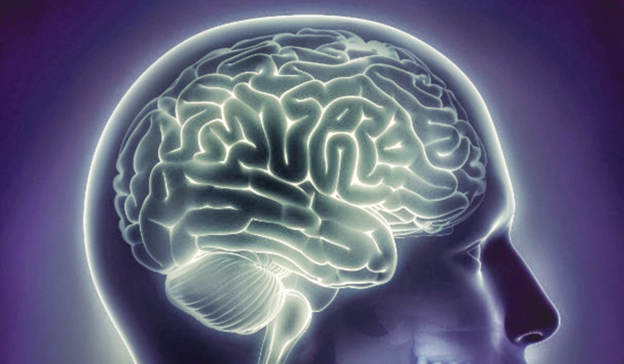How Alzheimer's Destroys the Brain   Alzheimer's Reading Room