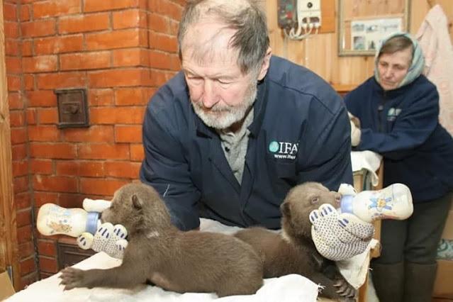Валентин Пажетнов, который годами спасал медвежат сирот, трагически утонул во время рыбалки!