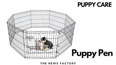 Puppy pen, Puppy, Pen, Puppy pencilmation, Puppy pencil sketch, Puppy pen setup, Puppy pencil drawing, Puppy pen training, Puppy pen and crate set up, Puppy pen ideas, Puppy pens indoor, Puppy pen vs crate, Puppy pen diy, Puppy pen training crying, Puppy pennywise, Puppy pencil hugger, puppy pen, puppy pen training, puppy pencil drawing, puppy pen ideas, puppy pens indoor, puppy pen vs crate, puppy pen diy, puppy pennywise, puppy pencilmation, puppy pen review, puppy pencil hugger, puppy pen crying, puppy pen potty training, puppy pencil art