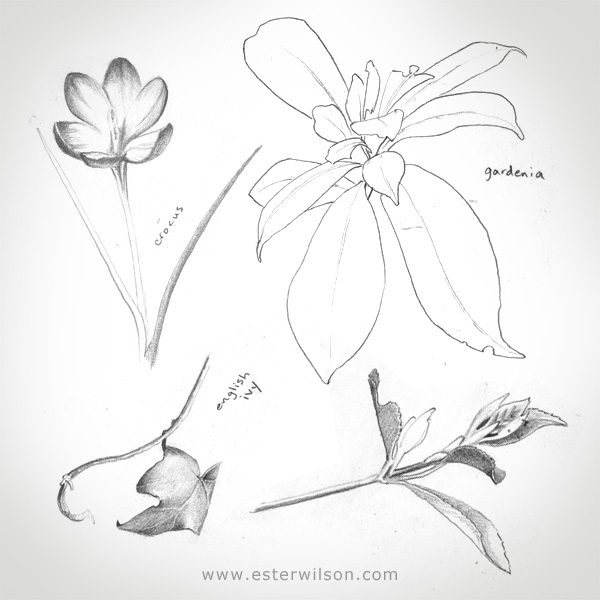 botanical artwork in my sketchbook