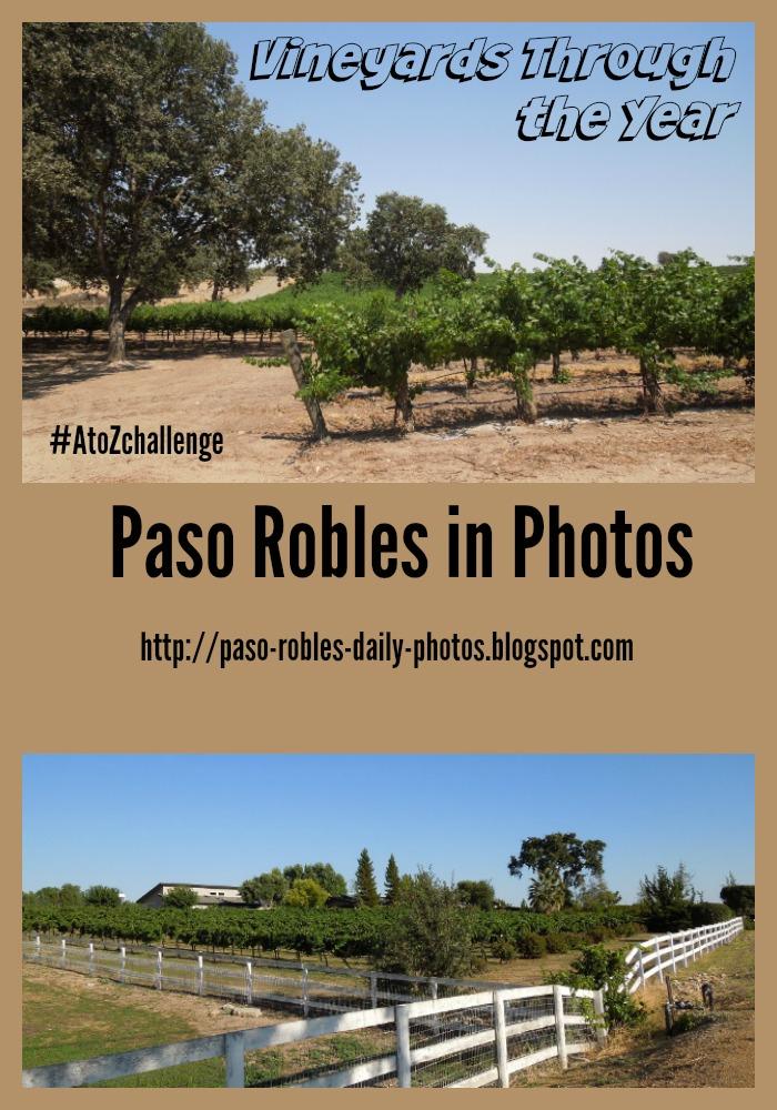 Vineyards Through the Year