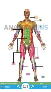 Corpo anatomia