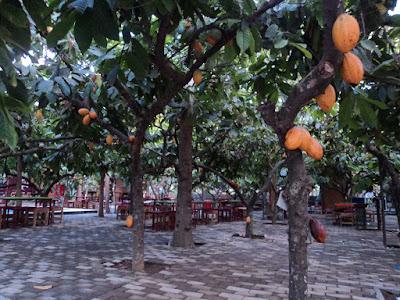 Wisata Kampung Coklat Blitar yang Bikin Ketagihan Wisata Kampung Coklat Blitar yang Bikin Ketagihan