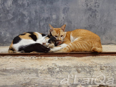 kucing (2)